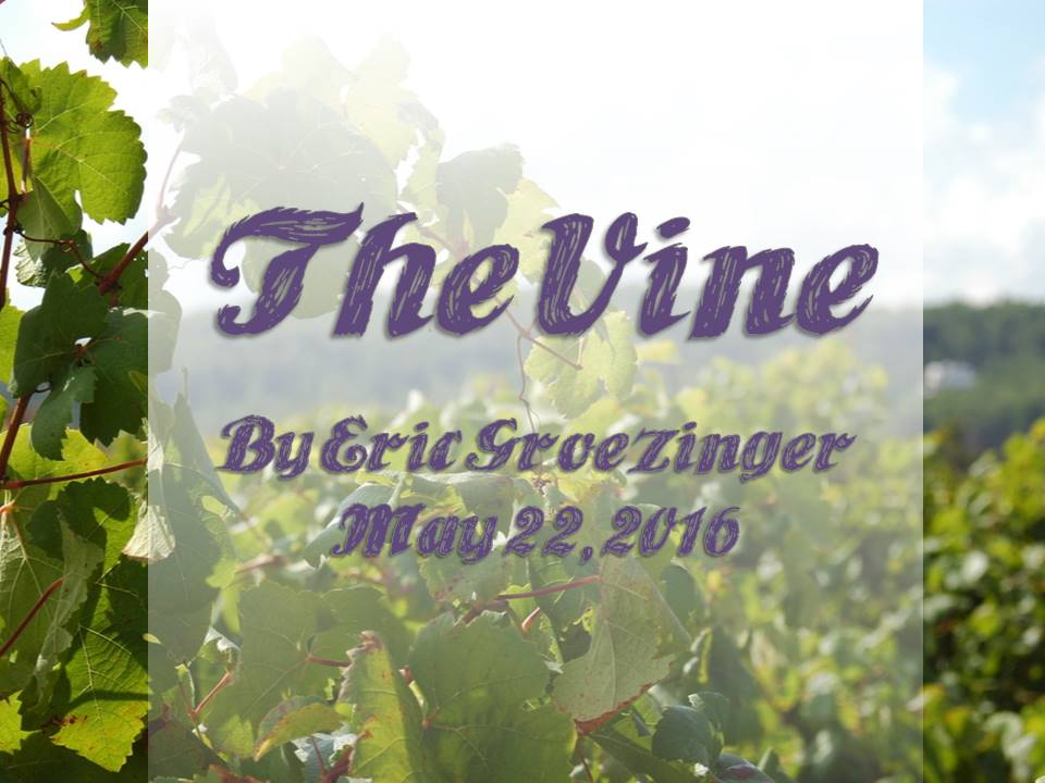 Jesus – The Vine