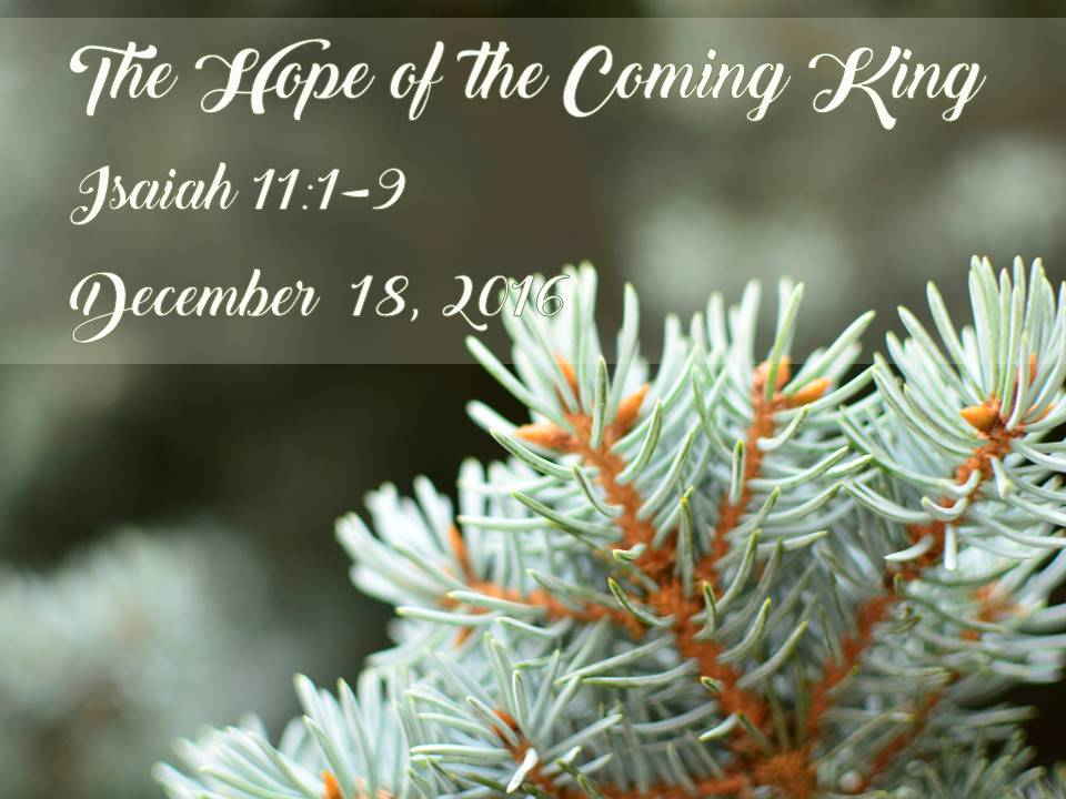 The Hope of the Coming King
